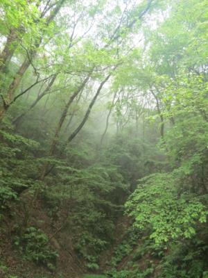 f:id:noronoyama:20120812063337j:image