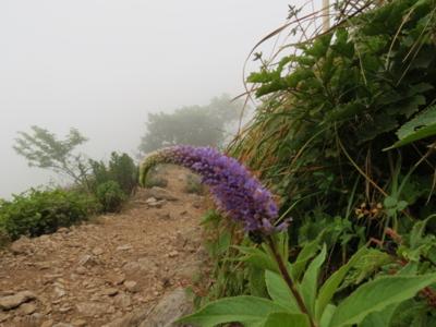 f:id:noronoyama:20120813133650j:image