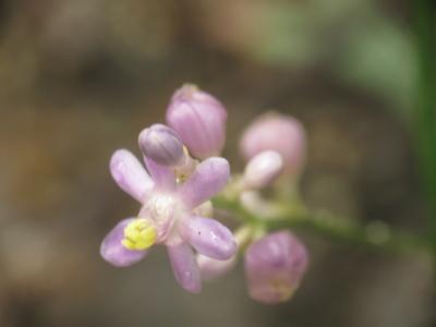 f:id:noronoyama:20120814160819j:image