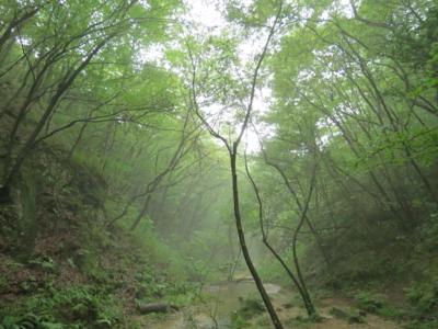 f:id:noronoyama:20120814171214j:image