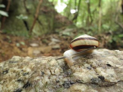 f:id:noronoyama:20120815133921j:image