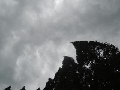 f:id:noronoyama:20120818145949j:image