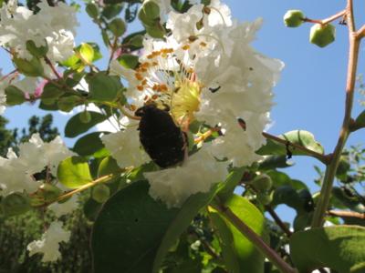 f:id:noronoyama:20120819124326j:image