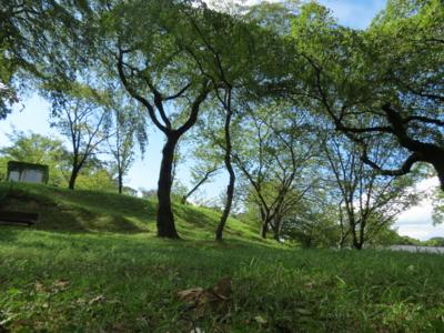 f:id:noronoyama:20120819151624j:image
