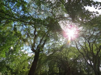 f:id:noronoyama:20120819151657j:image