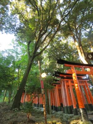f:id:noronoyama:20120825063422j:image