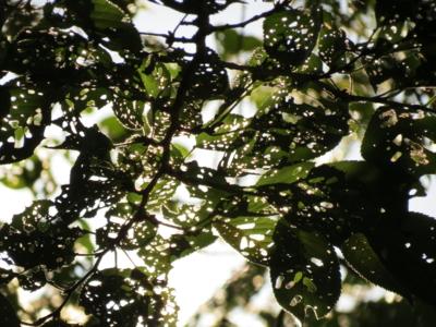 f:id:noronoyama:20120826161716j:image