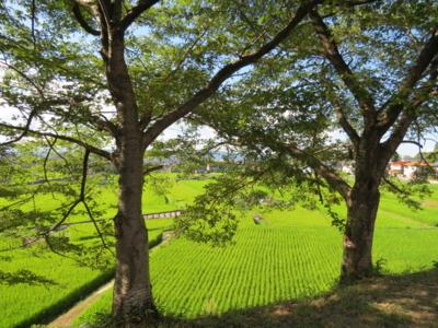f:id:noronoyama:20120826162019j:image