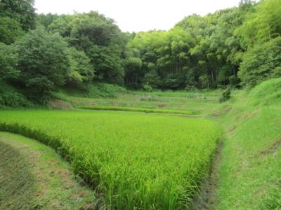 f:id:noronoyama:20120827164456j:image