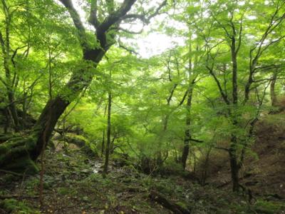 f:id:noronoyama:20120901095007j:image