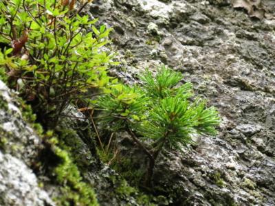 f:id:noronoyama:20120901102743j:image