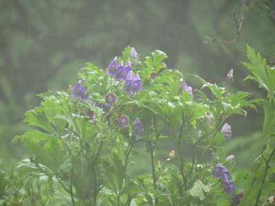 f:id:noronoyama:20120901110313j:image