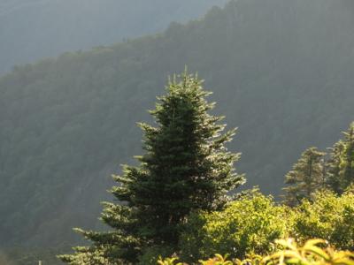 f:id:noronoyama:20120902062716j:image
