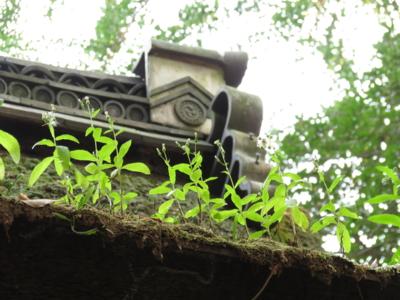 f:id:noronoyama:20120914075836j:image