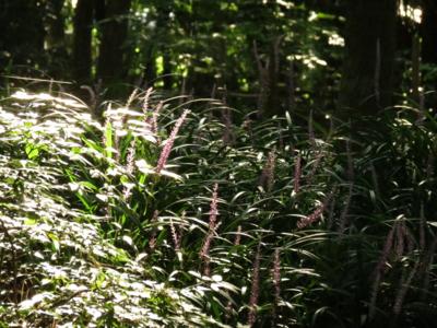 f:id:noronoyama:20120914081532j:image