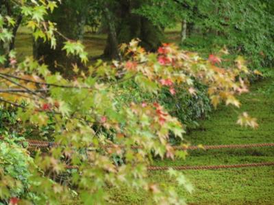 f:id:noronoyama:20120914143732j:image