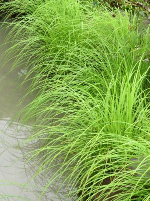 f:id:noronoyama:20120914145054j:image