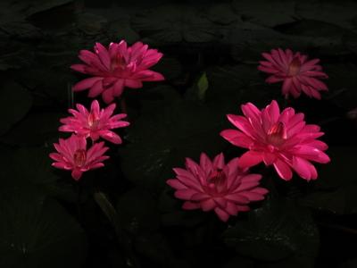 f:id:noronoyama:20120915200709j:image