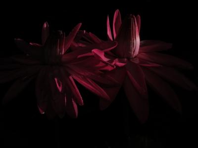 f:id:noronoyama:20120915201551j:image
