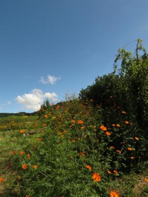 f:id:noronoyama:20120917132730j:image