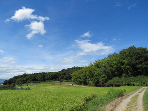 f:id:noronoyama:20120917133317j:image