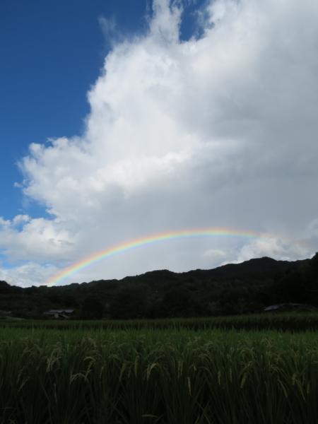 f:id:noronoyama:20120917160543j:image