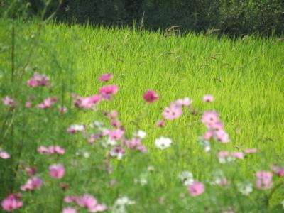 f:id:noronoyama:20120921133830j:image