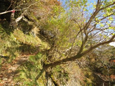 f:id:noronoyama:20121020085100j:image