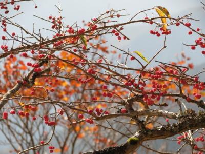 f:id:noronoyama:20121020085212j:image