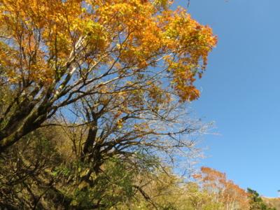 f:id:noronoyama:20121020085736j:image