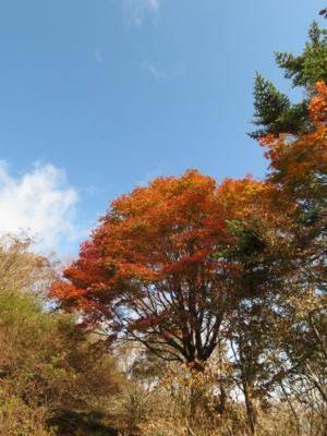 f:id:noronoyama:20121020105143j:image