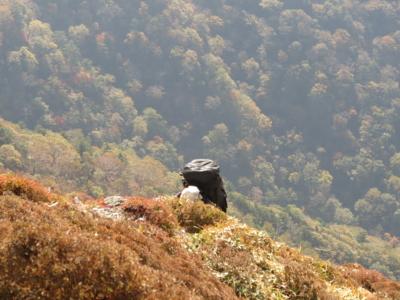 f:id:noronoyama:20121020115147j:image