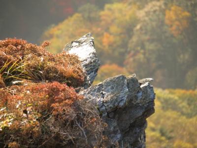f:id:noronoyama:20121021070048j:image