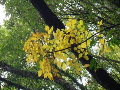 f:id:noronoyama:20121028161204j:image