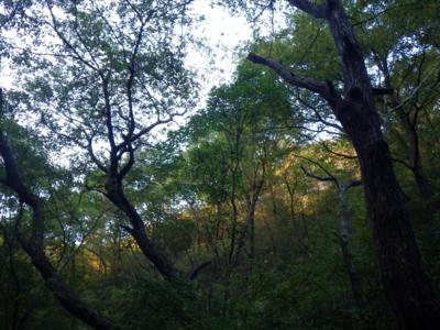 f:id:noronoyama:20121028162244j:image
