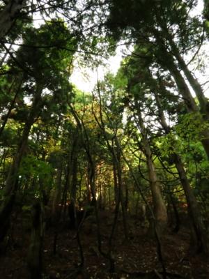 f:id:noronoyama:20121103072215j:image