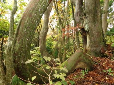 f:id:noronoyama:20121103074142j:image
