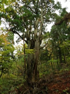 f:id:noronoyama:20121103074824j:image