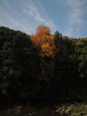 f:id:noronoyama:20121110092327j:image