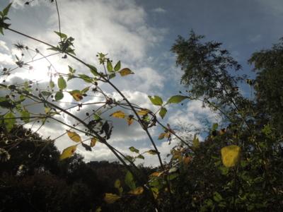 f:id:noronoyama:20121110123926j:image