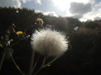 f:id:noronoyama:20121110124231j:image