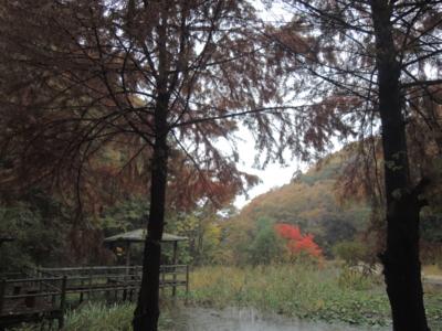f:id:noronoyama:20121111153631j:image