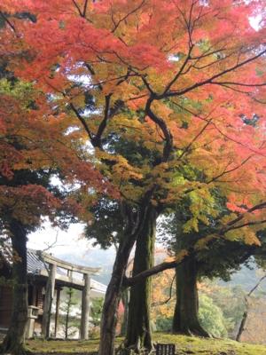 f:id:noronoyama:20121116092610j:image