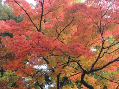 f:id:noronoyama:20121116092621j:image