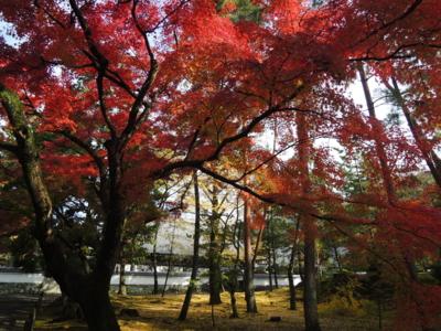 f:id:noronoyama:20121116093823j:image
