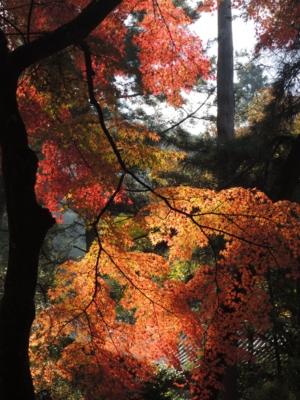 f:id:noronoyama:20121116094227j:image