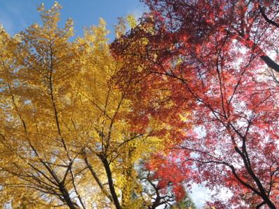 f:id:noronoyama:20121116094755j:image