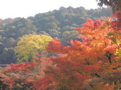 f:id:noronoyama:20121116101646j:image
