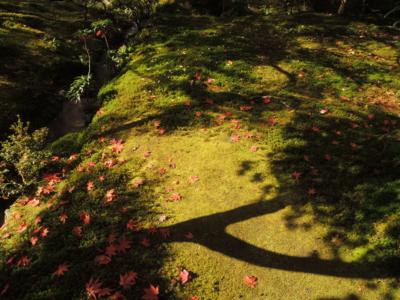 f:id:noronoyama:20121116113125j:image