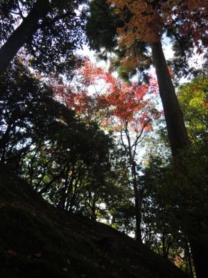 f:id:noronoyama:20121116113522j:image